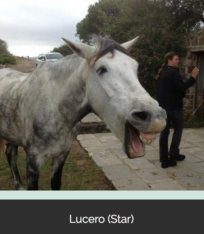 caballo Tarifa
