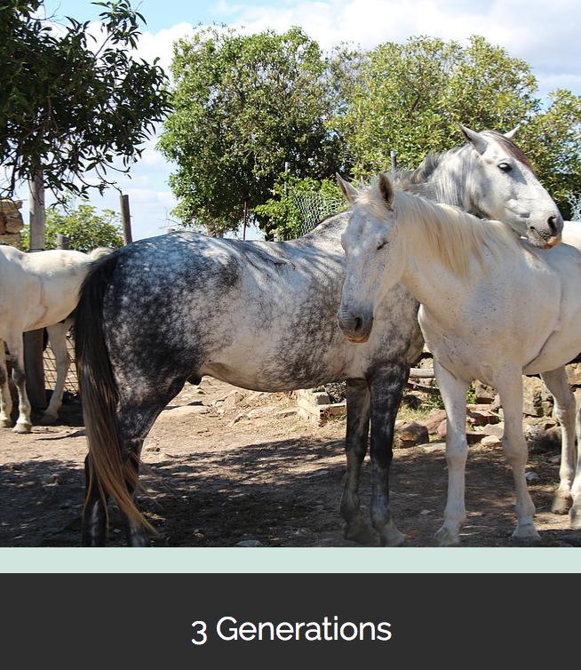 aventuras a caballo en Tarifa