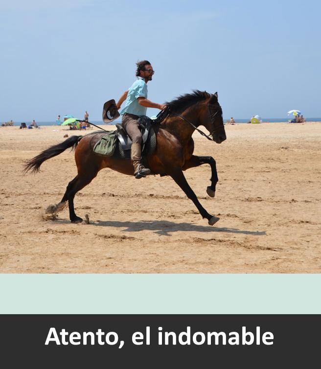 aventuras del sur horse ride. Travel on horseback!!