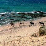 Beach ride Andalusia