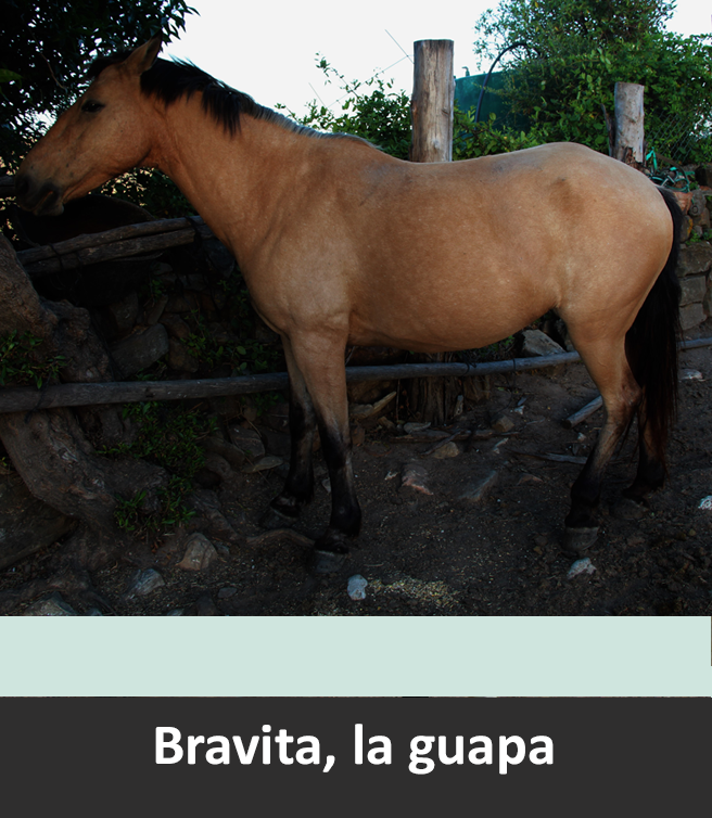 Bravita, little but brave!!