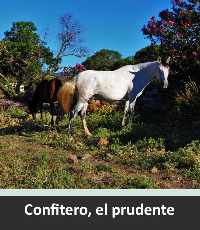 Confitero-1