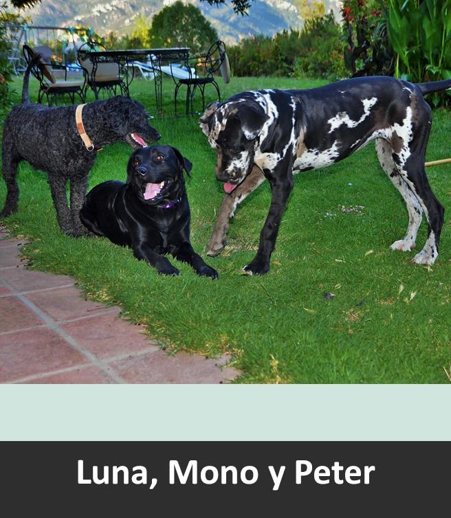 luna-mono-peter