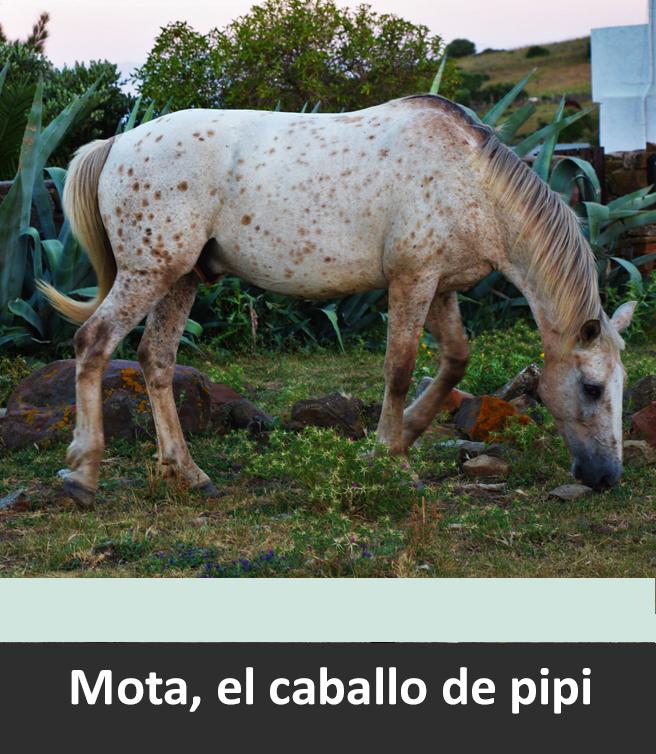 Mota, PiPi Langhstrud horse