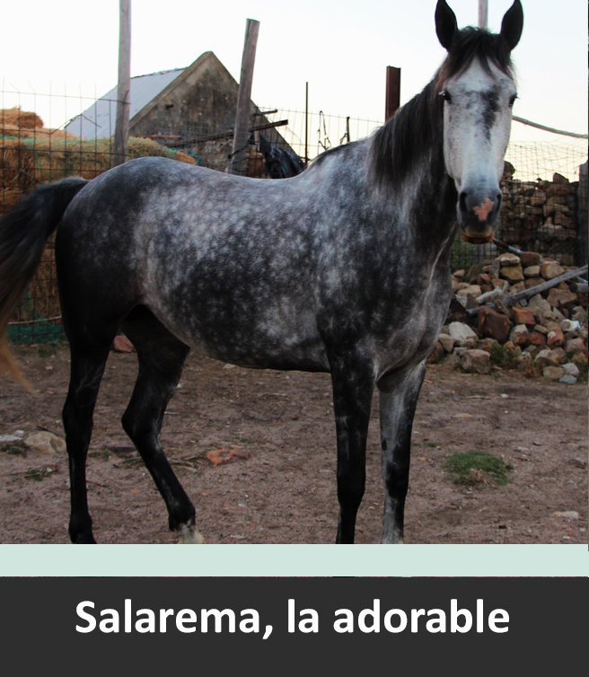 Andalusia horse riding holiday