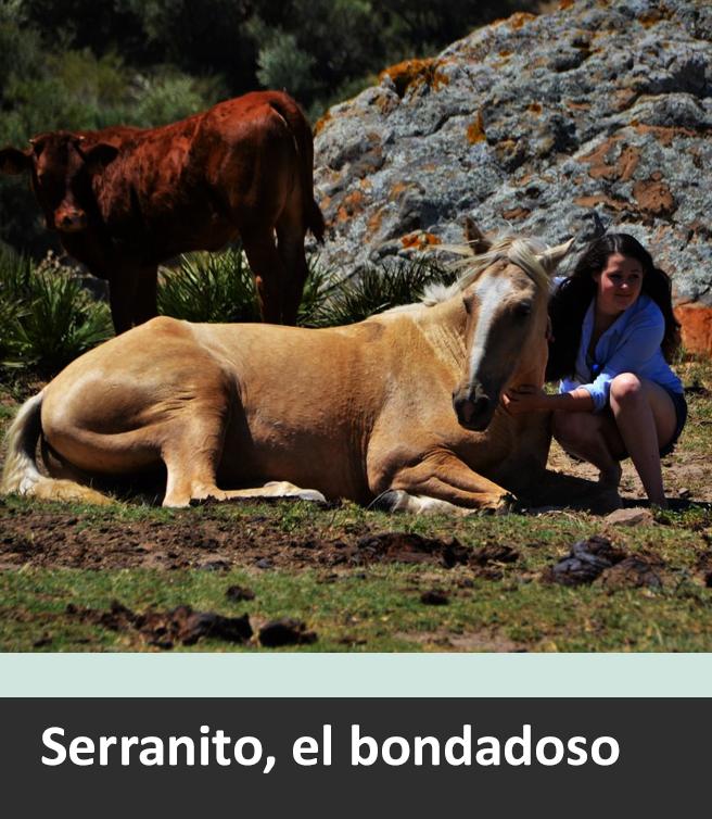 Serranito, die Art