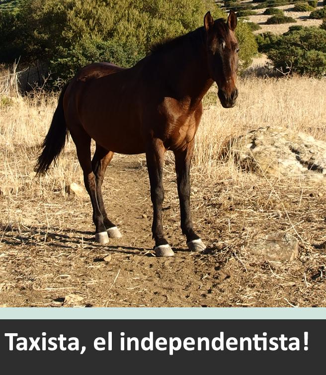 Taxista, der Unabhängige